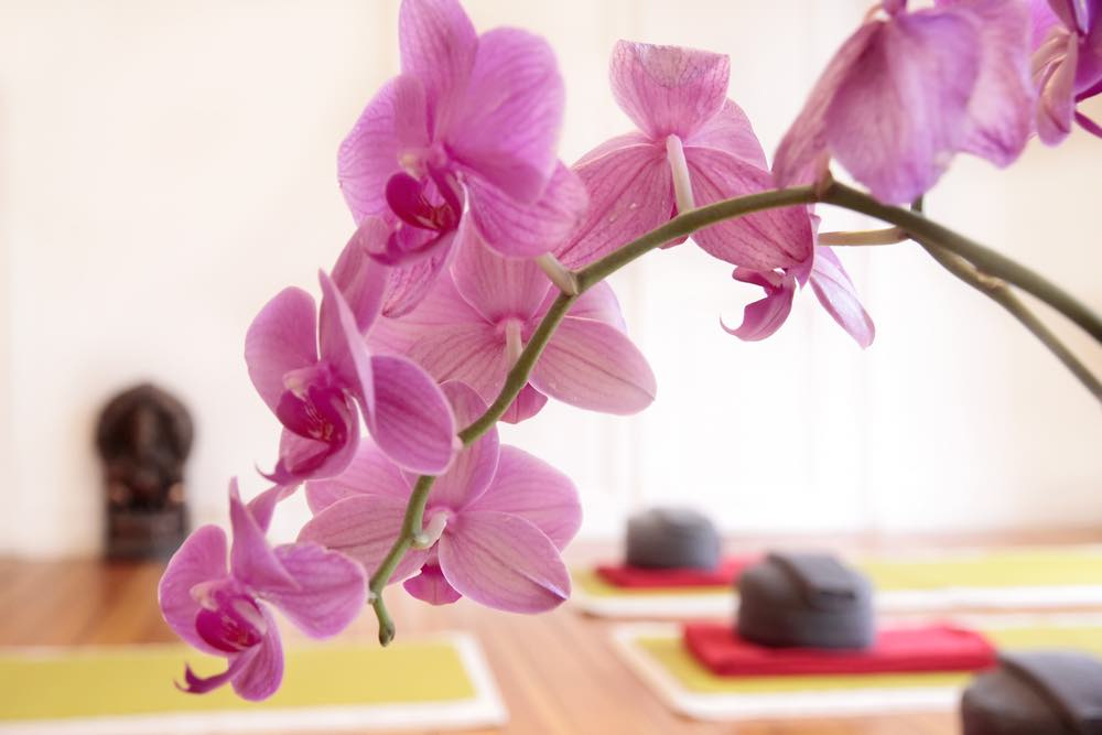 yoga-trieves-cours-stages-rhone-alpes-auvergne