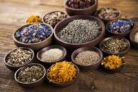 stage-plantes-sauvages-cuisine-botanique-drome-toussaint-2018